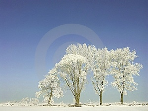 Winter Scenery, Frost Covered The Trees Royalty Free Stock Photography - Image: 9641707