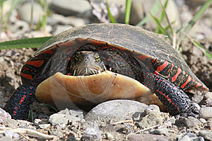 Tortue Photographie stock - Image: 9644692
