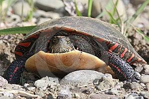 χελώνα Στοκ Φωτογραφία - εικόνα: 9644692