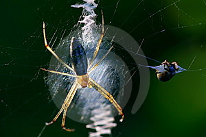 Spider Stock Image - Image: 9646231