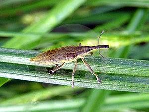 Bug Weevil Stock Photo - Image: 9652500