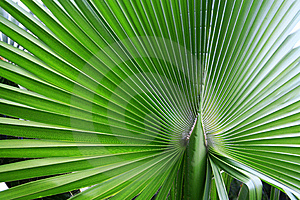 The Big Green Palm Leaf Stock Image - Image: 9655921