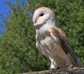Owl Bird Animal Stock Image