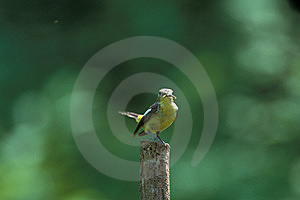 Bird Stands On Wooden Pillar Royalty Free Stock Photography - Image: 9660547