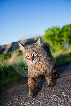 Prowling Hunter Royalty Free Stock Photos - Image: 9663228