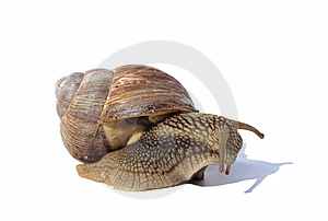 Depressive snail Stock Photography