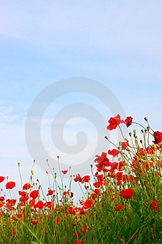 Poppy Field Background Royalty Free Stock Images - Image: 9680929