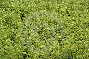 Zhengzhou Botanical Garden Royalty Free Stock Image - Image: 9681836