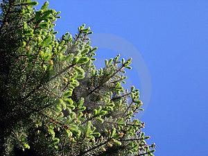 Tree Stock Image - Image: 9684891