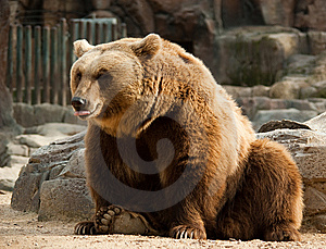Brown Bear Stock Photos - Image: 9690363