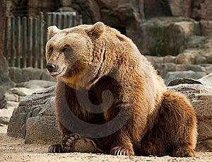 Brown Bear Stock Photos - Image: 9690363