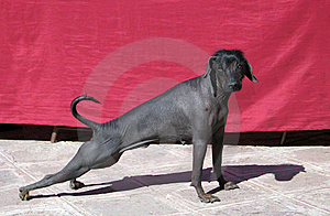 Dog In Cuzco Stock Image - Image: 9690541
