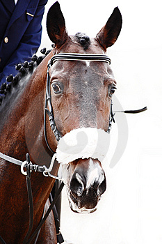 Posh Bay Horse Stock Photo - Image: 9694530