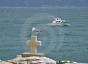 Gull And Croos At Sea Stock Images - Image: 9695234