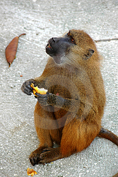 Lunch Royalty Free Stock Photo - Image: 970015