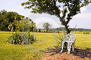 Lawn Chair Under Tree Royalty Free Stock Image - Image: 970236