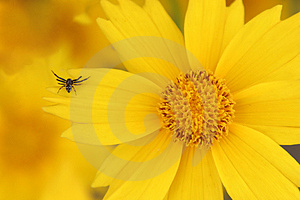 Yellow Flower And Spider Stock Photo - Image: 978690
