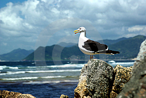 BIRD Royalty Free Stock Images - Image: 9700099