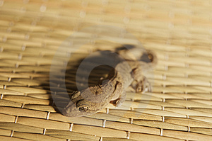 Gecko On A Beach Mat Royalty Free Stock Photos - Image: 9704848