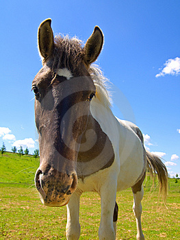 Horse  On Green Field Royalty Free Stock Images - Image: 9709489