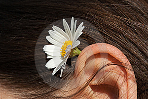 Camomile In Hair Royalty Free Stock Photography - Image: 9710347