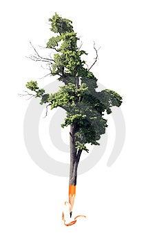 Pencil Tree Stock Photo - Image: 9713830