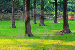Trees And Lawn Stock Photo - Image: 9726390