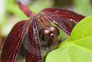 Dragon Fly Stock Photos - Image: 9734973
