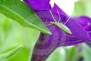 Young Grasshopper Stock Photography - Image: 9735282