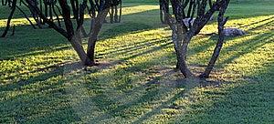 Sunshine Through Woods Stock Images - Image: 9737334