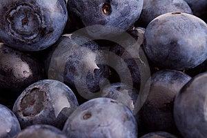 Blueberry Macro Royalty Free Stock Photo - Image: 9737585