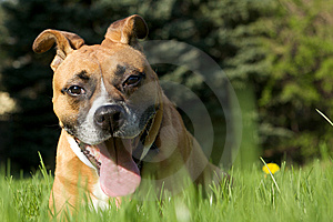 Funny Dog In The Grass Royalty Free Stock Photos - Image: 9738038