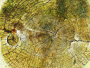 Cut Tree Royalty Free Stock Image - Image: 9742146