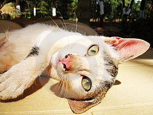 Lazy Cat Stock Images - Image: 9742324
