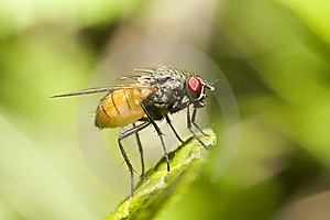 Extreme Close-up Of Fly On A Leaf Royalty Free Stock Photo - Image: 9744625