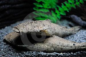 Aquatic Life Royalty Free Stock Image - Image: 9747856