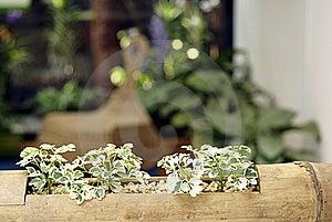 Decorative House Plants Stock Image - Image: 9749281