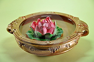 Lotus Fortune Plant Royalty Free Stock Photography - Image: 9757977
