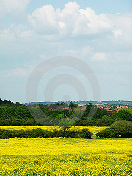 Yellow Field Royalty Free Stock Photography - Image: 9758857