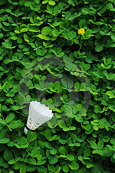Badminton Royalty Free Stock Images - Image: 9763259