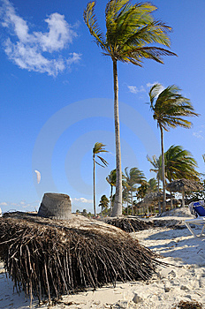 Tropical Beach With Coconuts Royalty Free Stock Images - Image: 9763289