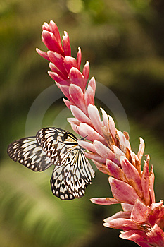White Butterfly Stock Photography - Image: 9766552