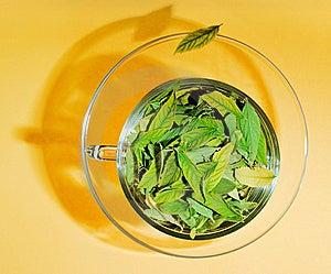 Freshness Stock Image - Image: 9768491