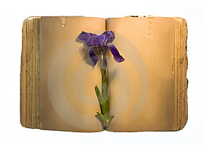 Old Book With Flower Royalty Free Stock Photos - Image: 9769318