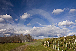 New England Orchard In The Fall Royalty Free Stock Photography - Image: 9771077