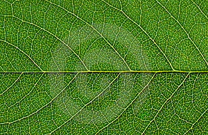 Leaf Surface Stock Image - Image: 9772621