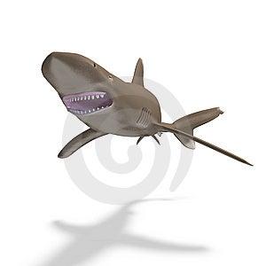 Oceanic Whitetip Shark Stock Photo - Image: 9773730