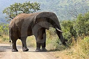 Elephant Royalty Free Stock Photos - Image: 9779058