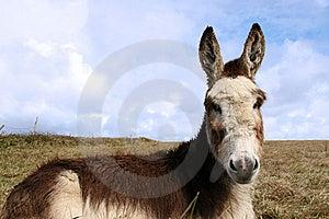Little Donkey Stock Photos - Image: 9781243