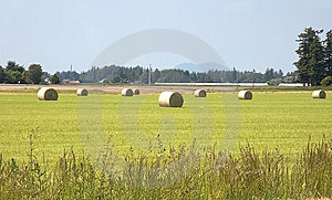 Large Hay Bales In Rural Field Royalty Free Stock Image - Image: 9783446
